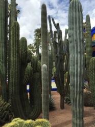 Cactus, jardin Majorelle